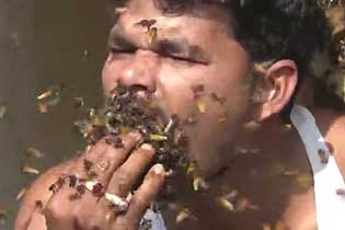 """大口""""吃""""活蜂!印度采蜜人堪称蜂巢毁灭者"""