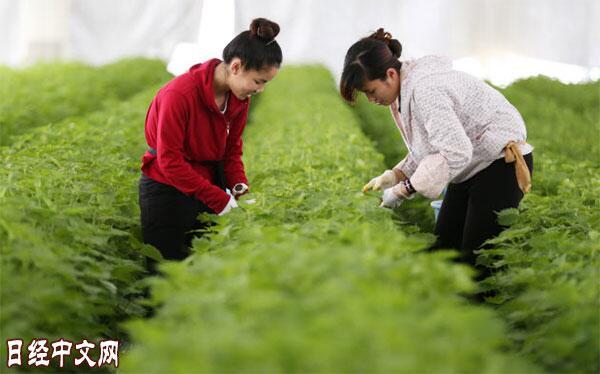 完善外籍劳力就业环境 日本要求外国劳动者报酬不得低于日本人