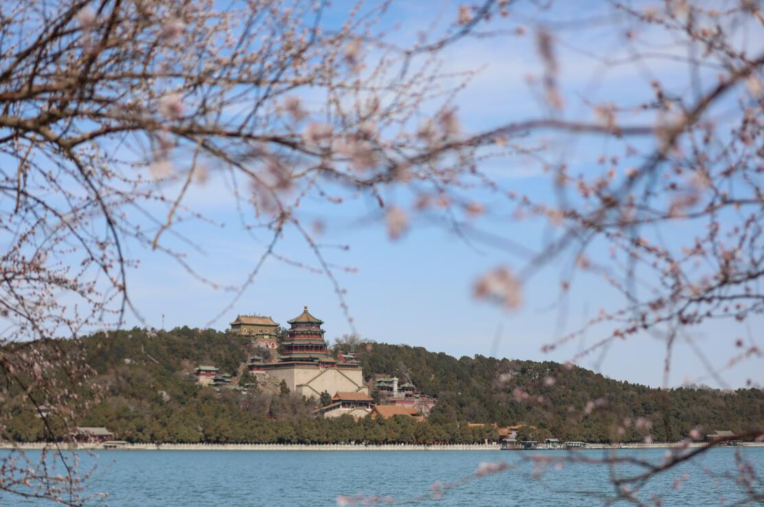 北京春日持续高颜值天气 颐和园桃花竞相绽放