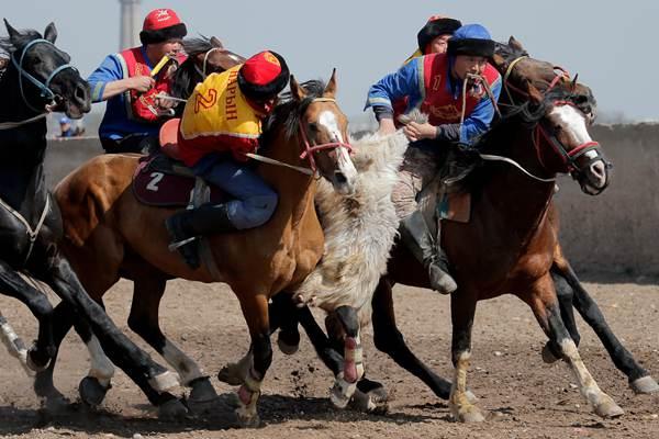 """吉尔吉斯斯坦举办""""马背叼羊""""大赛 骑手飞身夺羊精彩刺激"""