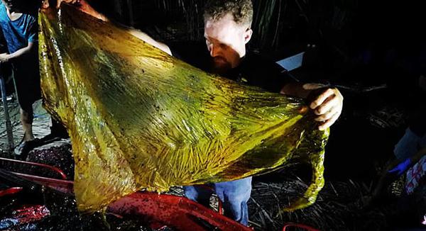 菲?#26432;?#28023;岸现喙鲸尸体 胃中塑料垃圾达38千克
