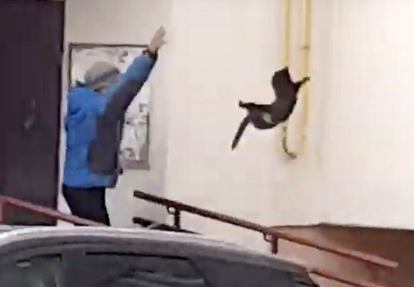 俄男子把猫扔向驼鹿将其吓跑被指残忍