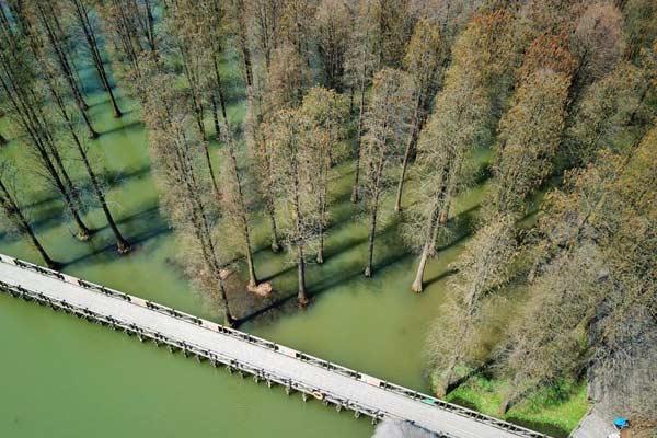 上海郊野公园60亩水上森林焕发生机
