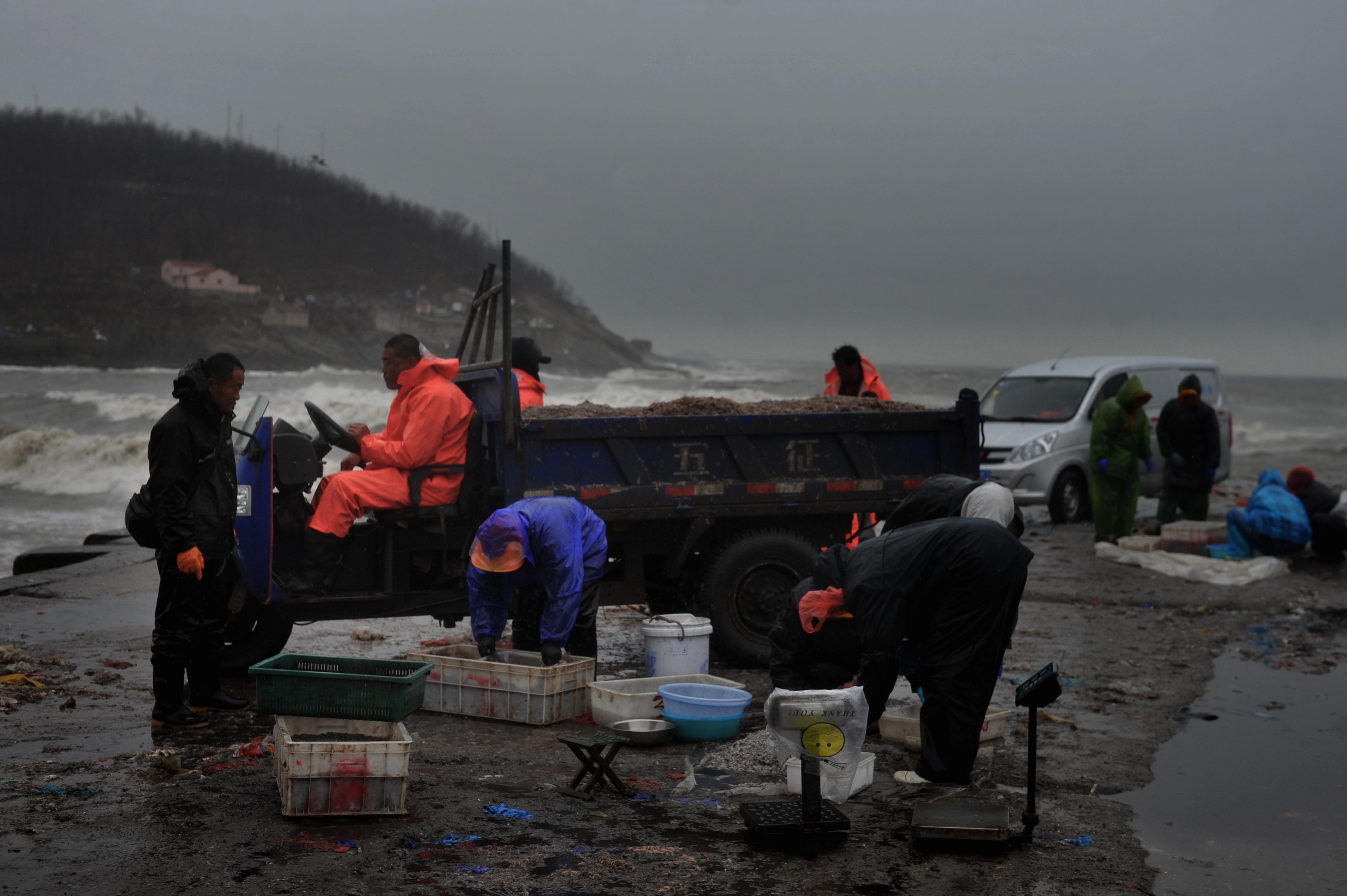 寒潮影响青岛:海面掀起大浪拍岸 成群海鸥在渔港避风