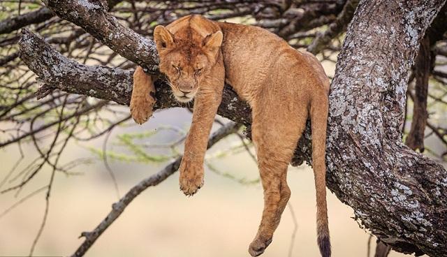 """世界睡眠日:动物睡姿千奇百态 """"睡艺""""精湛"""