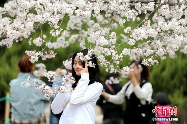 春暖花开吸引如织游人