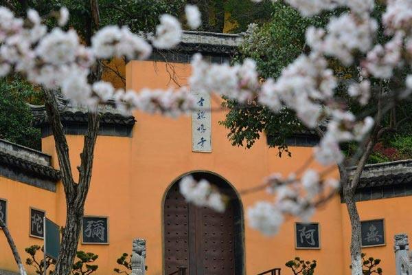 南京鸡鸣寺樱花盛开