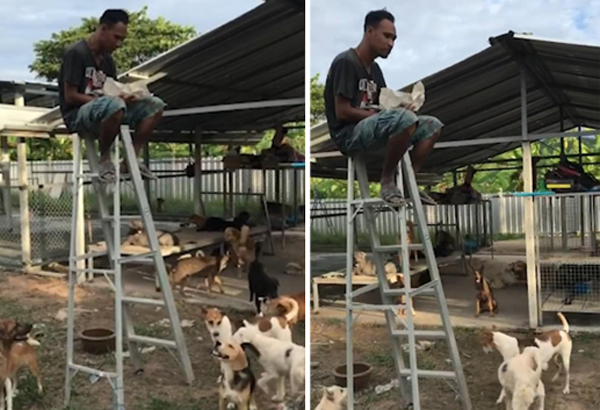 泰男子被一群流浪狗包围 无奈坐梯子顶端吃饭