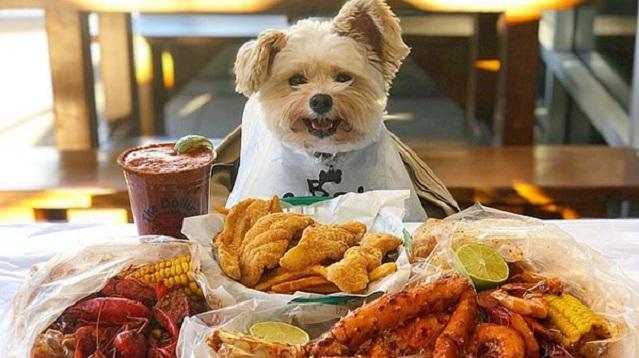 """从""""流浪儿""""到网红!美""""甜狗""""成为美食明星"""