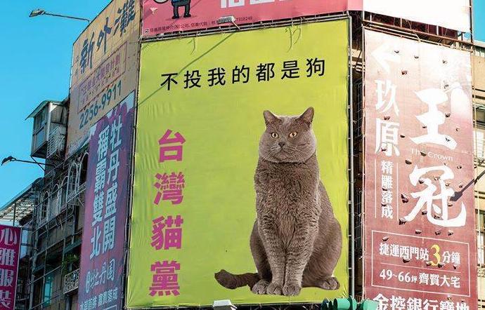 台湾网络投票表现 赖清德打不赢一只猫