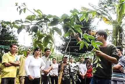 钦州:种植技能培训助脱贫