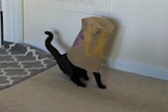 美贪吃猫咪头被困食品袋 呆萌样子惹人笑