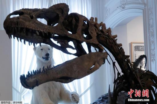 专家确认史上最大暴龙:身长13米 重8800公斤(图)