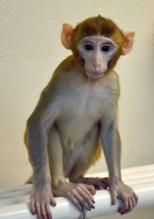 我不是斗战胜佛,我是一只承载着生育希望的猕猴……