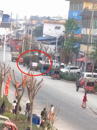 """野生大象""""到访""""云南小镇商业街 未造成人员伤亡"""