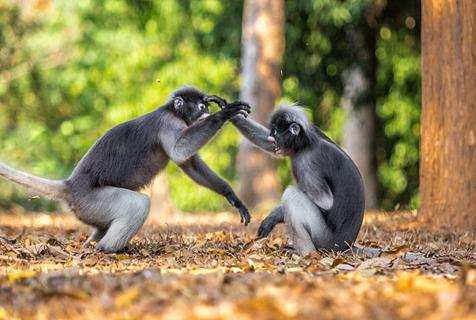 泰国公园现猴子打架 飞脚狠踹犹如少林武僧
