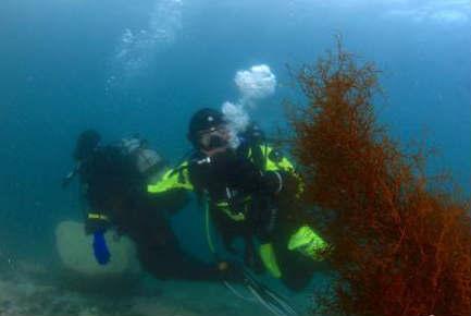 福建休闲潜水爱好者南极体验极地冰潜