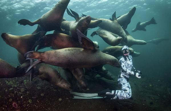 荷兰夫妇加拿大海域潜水被海狮群当成玩具围绕