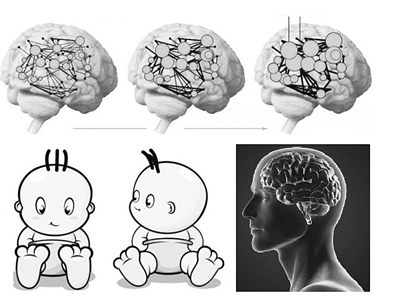 """人类大脑的""""发育时间表"""":30岁才成年 90岁仍在发育"""