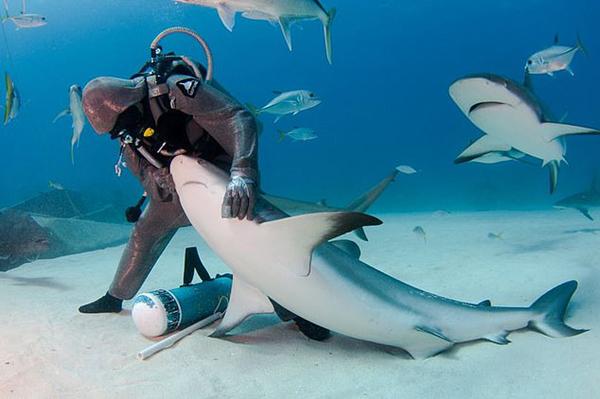 """意一女""""鲨鱼舞者""""运用独特驯鲨术帮其取鱼钩"""