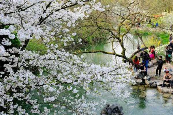 杭州西湖边繁花绽放 市民游客踏春赏花