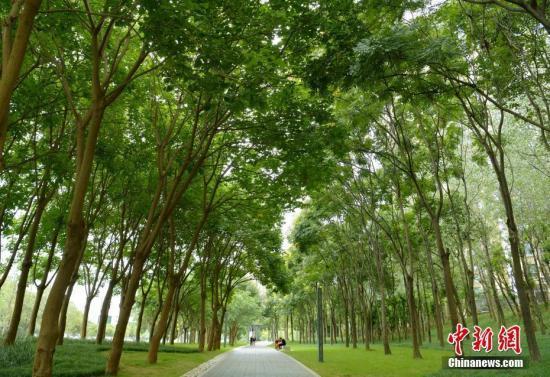 截至去年末中国建设绿道5.6万公里