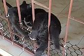 泰国一小猫为和小狗一起玩耍帮其钻栏杆