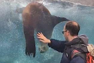美动物园一海狮痴迷游客右手随其旋转不停