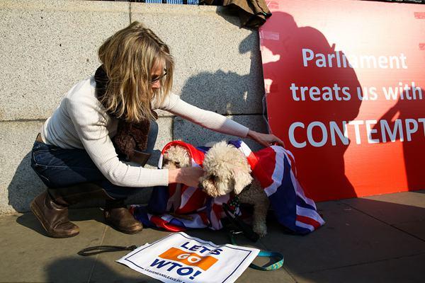 """英议会将就""""脱欧""""协议再表决 民众带狗狗示威"""