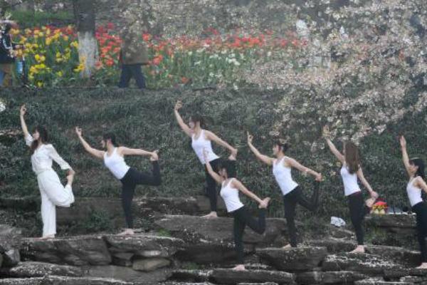 湖南瑜伽爱好者樱花树下秀柔美身段