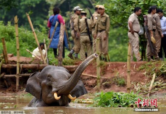 暖:6只小象被困泥淖 泰国巡逻人员连夜守护救援