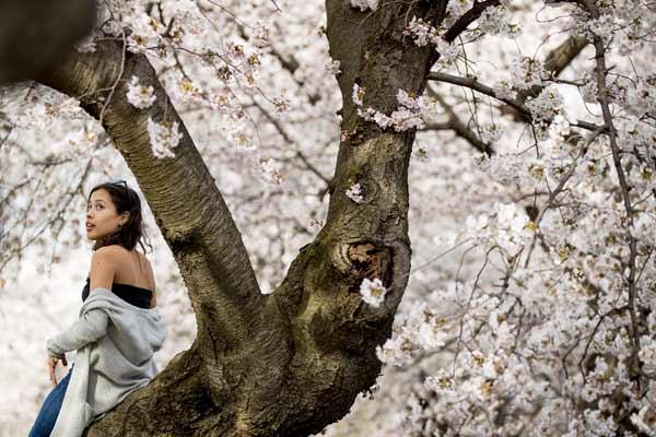 美国华盛顿迎来浪漫樱花季 美女花间拍照