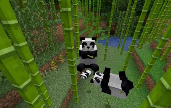 大熊猫是什么时候爱上竹子的?