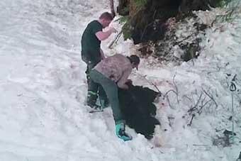 美国一对父子非法猎杀野熊母子 以为无人知晓