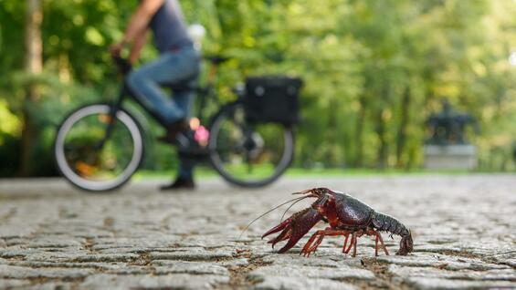 小龙虾清理步骤