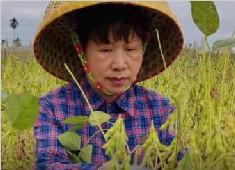 """人称""""女袁隆平""""的她,给中国大豆""""争气""""了"""