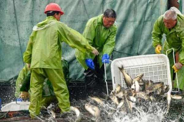 江西仙女湖投放逾200万斤鱼苗