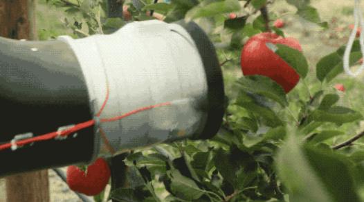 """机器人摘苹果 果农的""""世界末日""""来临了吗?"""