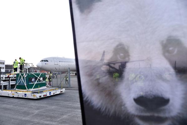 旅居15年!中国两只大熊猫抵达丹麦哥本哈根