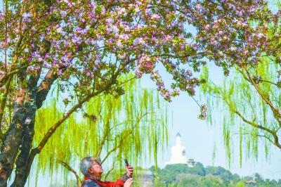 春季鼻过敏患者扎堆儿就诊 多数致敏元凶为树木花粉