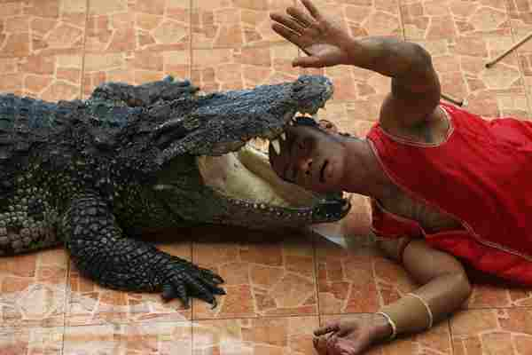 泰国猛男将头伸入鳄鱼口中与死神如此接近