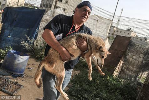 加沙一动物园濒临倒闭  动物获慈善机构营救