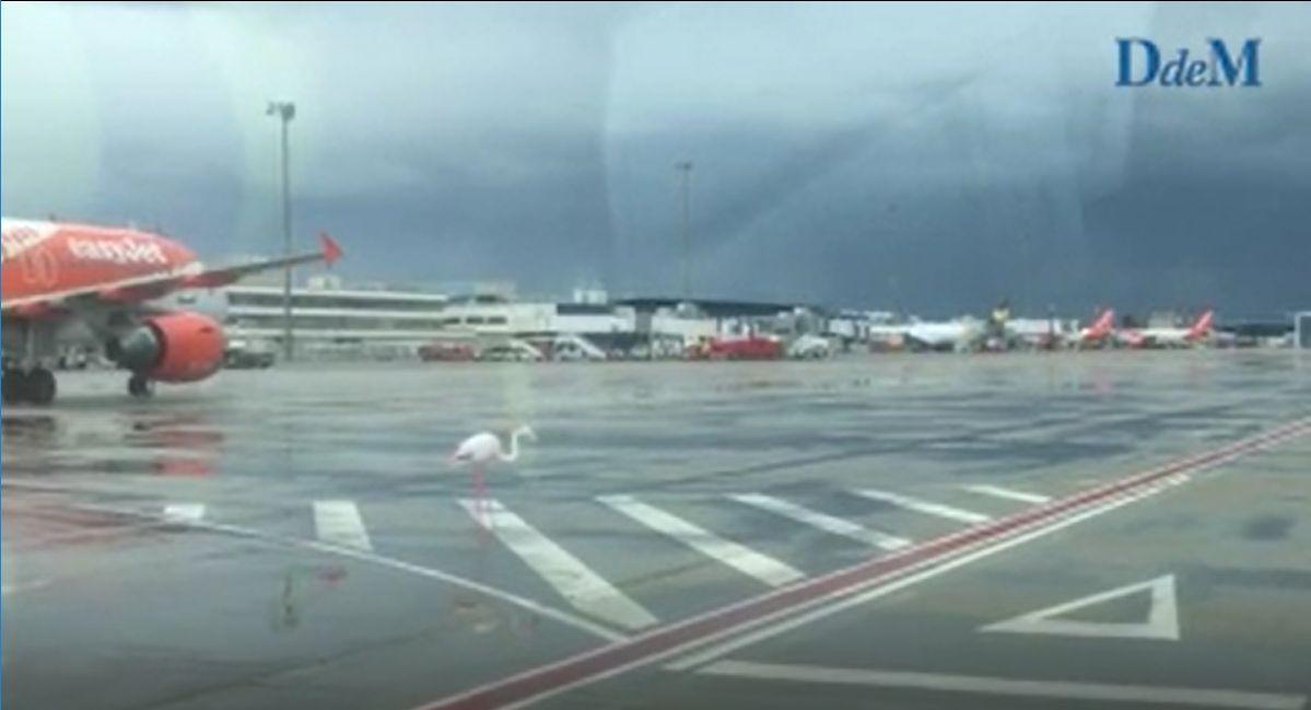 """西班牙机场现""""可爱""""不明来客"""