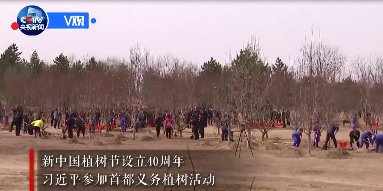 习近平:中国人工林 世界第一