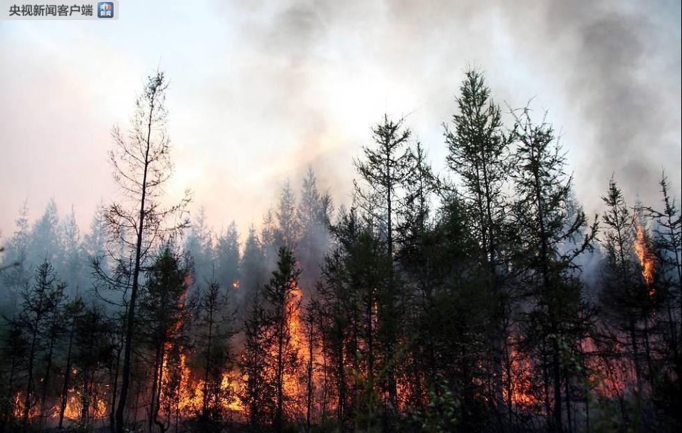 俄远东地区发生大规模森林火灾 过火面积近5000公顷