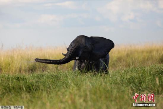 偷猎者闯入南非国家公园 其中一人被大象杀死