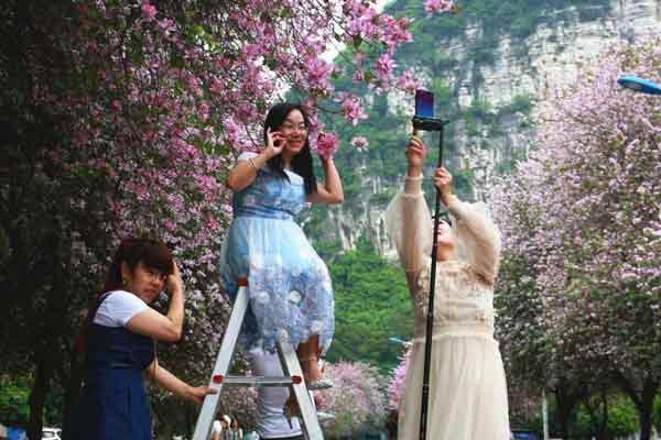 """广西柳州花开满城 民众""""花式合影""""成风景"""
