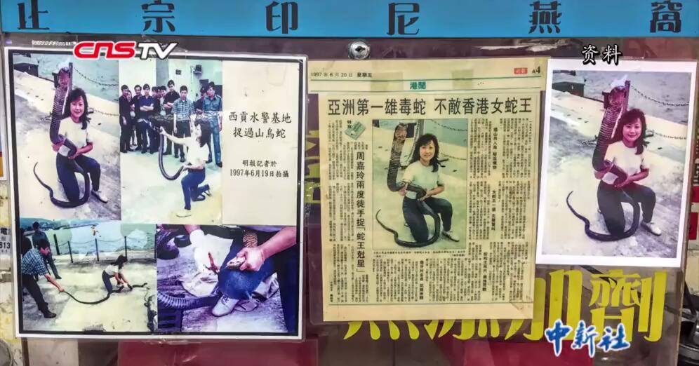 """香港""""蛇妹""""周嘉玲:与蛇共舞的40年"""