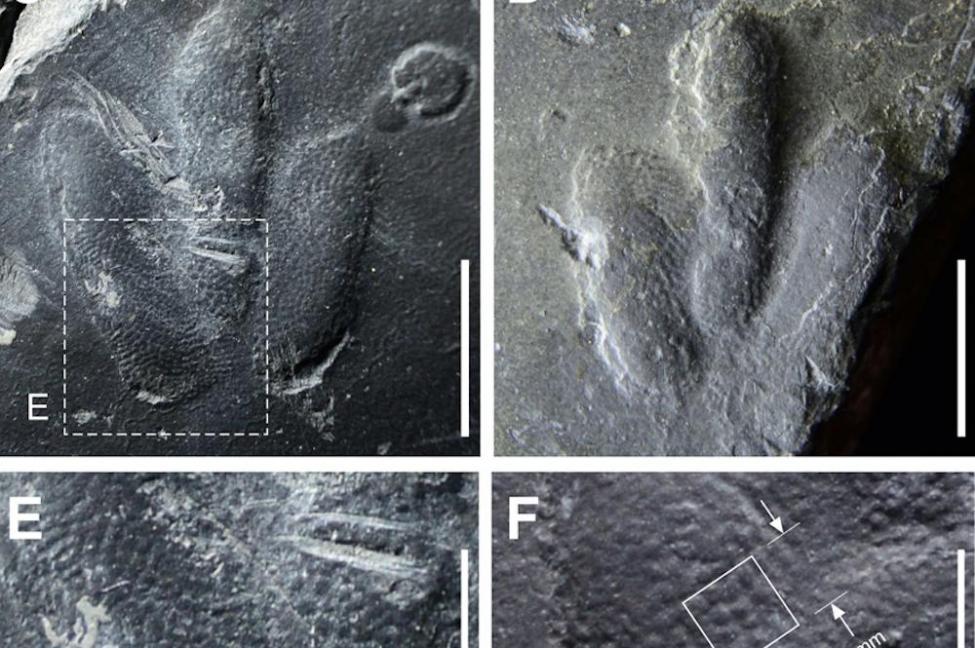 韩国发现白垩纪恐龙足迹 脚底皮肤纹理清晰可见