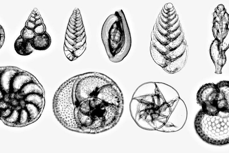 最新研究发现生物进化速度限制物种多样性恢复